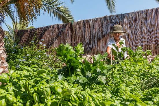 Our natural organic garden