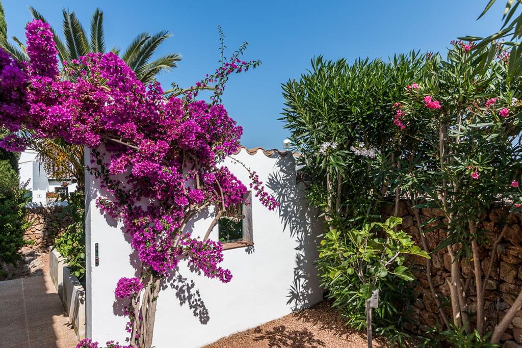 Blanco y verde, púrpura y rosa para buganvilla y adelfa en el jardín