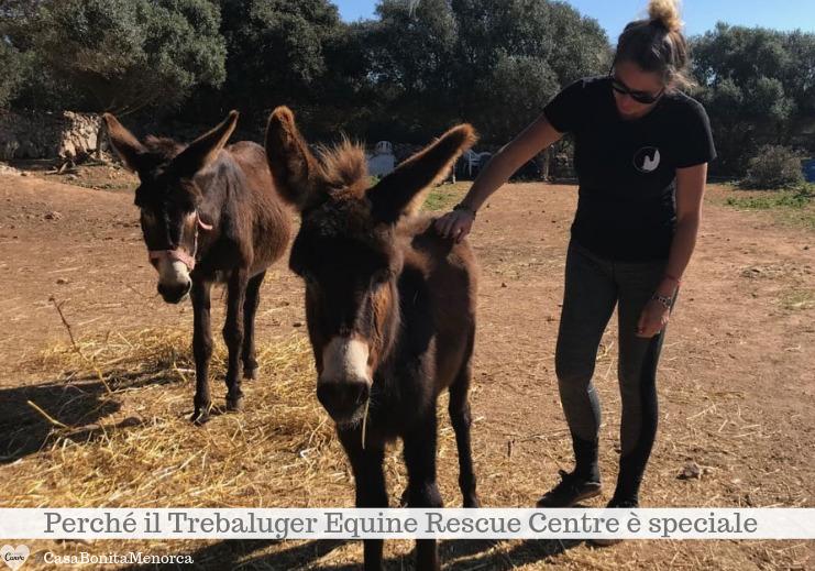 Anche gli asini trovano cure e cibo al Trebaluger Equine Rescue Centre